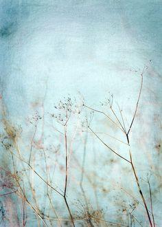 'Blue sky scrubs' von joshi bei artflakes.com als Poster oder Kunstdruck $16.63 #Fotografie #close up #nah #Makro #Makrofotografie #Blüte #Blumen #Flower #flowers #nature #Natur #Naturliebhaber, naturelovers #detail #Schönheit #Textur #Photoshop #dekorativ #fineart