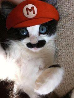 Mario, where's Luigi