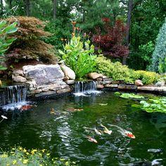 Japanese Landscaping - This koi pond landscaping won an aw. Fish Ponds Backyard, Outdoor Ponds, Koi Fish Pond, Backyard Water Feature, Koi Ponds, Garden Ponds, Pond Plants, Aquatic Plants, Garden Waterfall