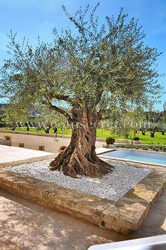 Location de vacances grande maison de prestige à Barbentane Provence, mas avec jacuzzi, piscine