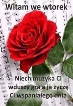 Weekend Humor, Good Morning, Rose, Floral, Plants, Tuesday, Buen Dia, Pink, Bonjour