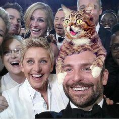 Lil Bub en Oscar