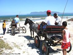 Anybody know what these buggies are?    horse_buggy_strandfontein