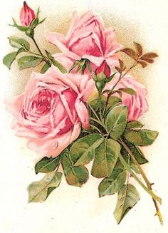 Pink Rose Bouquet, Pink Roses, Flower Images, Flower Art, Vintage Flowers, Vintage Pink, Vintage Style, Forget Me Nots Flowers, Cabbage Roses