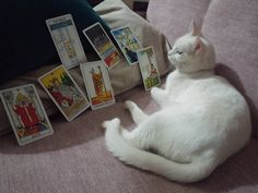 #tarotfalı #katze #kedi #kediler #cats #tarots #catstagram #catsofinstagram #tarotfalı #onlinefal  #Astroloji #burclar #tarotname #Doğumharitası #katina #askfali #cute  #кот #kedi #katze #catstagram #onlinetarotfalı #catstagram #kediler #cats #kitty # #instacat  #猫 #happy #cutecat #goodmorning #tarotoftheday #tarotonline uzmanlarimiza fal baktirmak icin profile #katina#astroloji#kedi#tarot#tarotname  by tarotname_com
