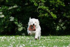 Apportierspiele für Hunde machen Spaß und stärken die Beziehung zu deinem Vierbeiner. Hier sind 3 lustige Spiele für den Alltag!