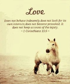 Horse Pictures With Scripture
