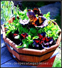 Desperate Gardener: Easy Container Gardening.  Start of the series, follow blog to other posts