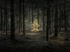 Light in the darkness...
