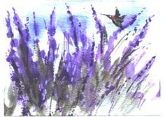 ACEO  Hummingbird in Lavender wildlife by jimsmeltzgallery on Etsy, $15.00