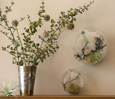 Cheap glass wall vase, Buy Quality wall vase directly from China wall glass vases Suppliers: Wall Bubble Terrariums, Glass Wall Vase, Wall Mounted Planters Great for Air Plants/Succulents, Wall Decor/Indoor Decor Hanging Glass Terrarium, Glass Vase, Terrariums, Terrarium Containers, Wall Mounted Planters, Scabiosa Pods, Flora Grubb, Star Flower, Plant Wall
