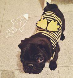 I'm a bee.... Bzzzz bzzzz