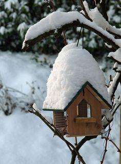 Vogelhuisje in de wintertuin.