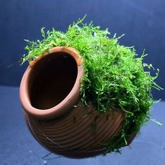 Java Moss + Ceramicjar(L) - Aquarium Ornament Live aquaric plant fish tank