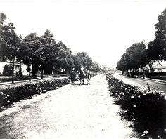 Rodeo Drive, Beverly Hills, circa 1925!