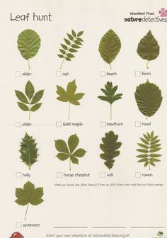 Ticklist of common tree leaves. Get kids outdoors exploring with this fresh activity from the Woodland Trust's nature detectives website. Bring the outdoors into your classroom with this inspiring activity from the Woodland Trust's nature detectives we. Forest School Activities, Nature Activities, Outdoor Activities For Preschoolers, Scout Activities, Autumn Activities, Science Nature, Outdoor Education, Outdoor Learning, Outdoor Play