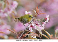 ภาพสต็อก, ภาพและเวกเตอร์ปลอดค่าลิขสิทธิ์ - Shutterstock