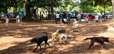 Overton Bark - 1.3-acre enclosed dog park with water fountains, clean-up stations, and an obstacle course.