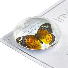 6 Glass Butterfly Magnets - From Lakeland
