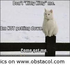 """Don't """"kitty kitty"""" me!"""