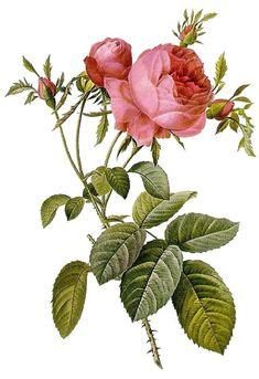 Inspiration - blog.countrygardenroses.co.uk
