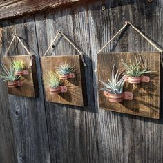 Houseplants for Better Sleep Hanging Air Plant Plaques With Copper Holders Three Plaques Each Containing Two Plants Your Custom Order Will Include: 6 Carefully Selected Healthy Air Plants 3 Inch Stained Hardwood Plaques With 2 Copper Holders On Eac Air Plant Display, Plant Decor, Hanging Air Plants, Indoor Plants, Indoor Herbs, Garden Art, Garden Design, Garden Ideas, Decoration Plante