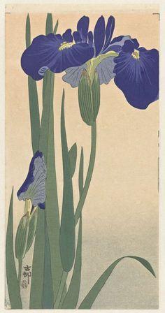Blue Irises, Ohara Koson, 1900 - 1930