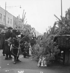 Christmas trees for sale in 1957 - London Evening Standard