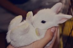 Como cuidar a mi coneja preñada? – ¡Mi hijo es un conejo!