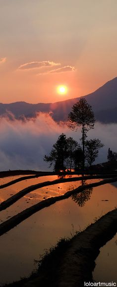 Rice terrace, Yuanyang, CHINA