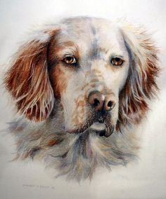 Joey.   Sherry Egger Colored Pencil