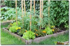 Great tips for starting a vegetable garden for beginners. Learn how to choose seeds and plants for a simple beginner vegetable garden plan.