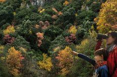 Vegetación, paisaje y colores en Parque Natural Font Roja de #Alcoy #Alcoi #naturaleza