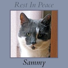 Animal Shelter Volunteer Life: Fly Free, Sweet Sammy - this story made me cry.  It always amazes me how much we love our furbabies