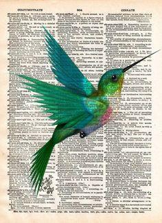 impresión del arte del colibrí, pájaro arte, los niños del arte, el diccionario de la vendimia de impresión
