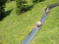 Alpine Slide in Kandersteg