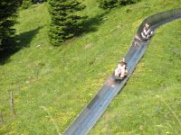 Alpine Slide in Kandersteg