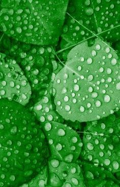 ideas plants green leaves colour for 2019 - Modern World Of Color, Color Of Life, Green Colors, Blue Green, Fresh Green, Terra Verde, Leaf Texture, Leaf Coloring, Water Droplets