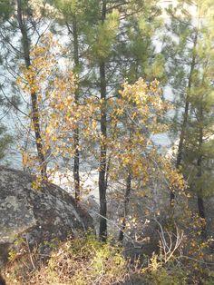 Los colores del otoño, con El Burguillo de fondo.