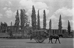 Cavea del Circo Massimo – Sullo sfondo il Palatino Anno: 2 agosto 1936