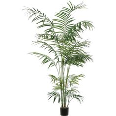 Vickerman Tropical Palm Deluxe Tree in Pot ❤ liked on Polyvore featuring home, home decor, plants, tropical palms, tropical palm plants, tropical home decor and tropical palm trees