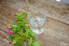 Grow Cuttings from Established Plants