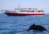 Reviews of Cape May Whale Watcher Cape May NJ