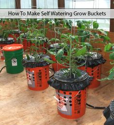 How To Make Self Watering Grow Buckets Read HERE --- > http://www.livinggreenandfrugally.com/self-watering-grow-buckets/