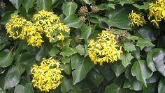 Consejos para plantar enredaderas o trepadoras