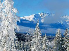 Edith Beerda – Hudson's Bay Mountain, Smithers Road Trip Destinations, Winter Destinations, Parc National De Banff, Winter Road, Canadian Winter, River Trail, Canada, Winter Beauty, Beauty Photos