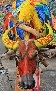 Carabao Painting Contest (Karbo Festival) by Edgar Alan Zeta-Yap Viva Vigan Binatbatan Festival of the Arts 2012, Vigan City, Ilocos Sur, Philippines