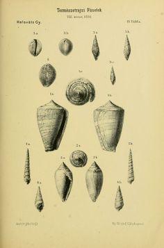 v. 8-9 1884-85 - Természetrajzi Füzetek kiadja a Magyar nemzeti Muzeum. - Biodiversity Heritage Library