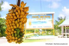 Budget Travel In Samoa - http://ouroyster.com/jade/budget-travel-in-samoa