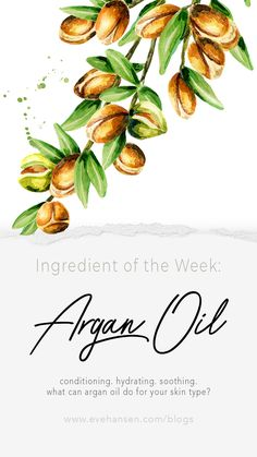 Ingredient of the Week: Argan Oil Argan Oil Lip Balm, Argan Oil Eyes, Argan Oil Hair Treatment, Argan Oil Skin Benefits, Essential Oils For Face, Moroccan Oil, Liquid Gold, Dream Hair, Oils For Skin